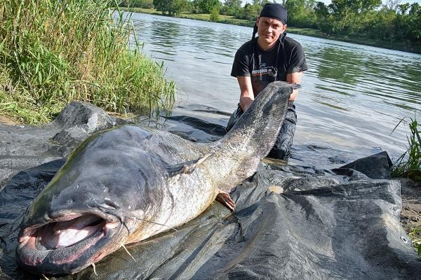 catfish_waller_euro-som_vitali_dalkeE3942C52-46F3-0201-0765-3FFBC4658557.jpg
